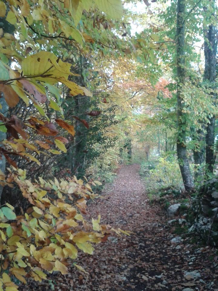 Paysage automne 2